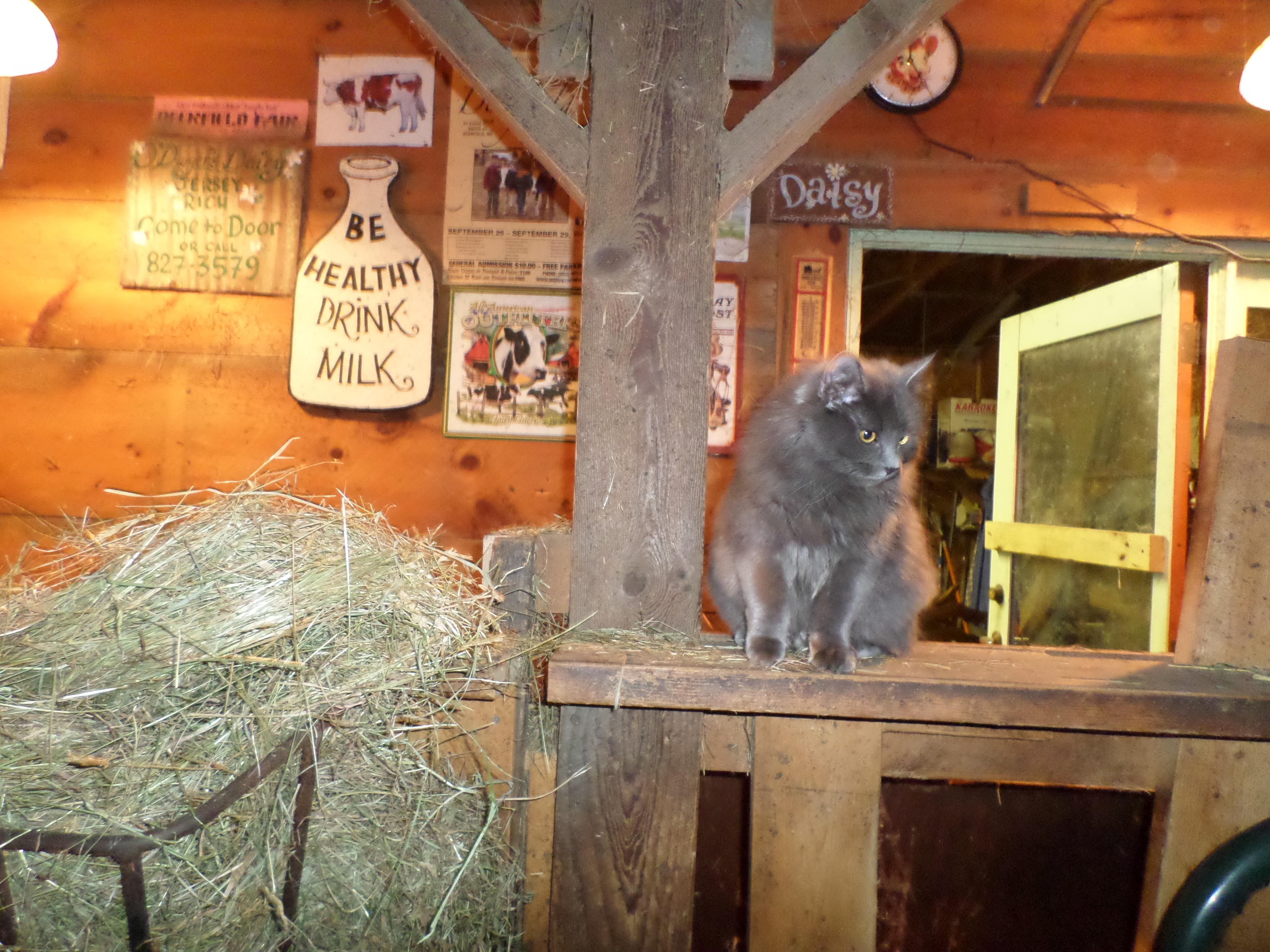 Ursula helping in the barn.